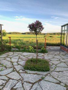 Utsikt från orangeriets uteplats
